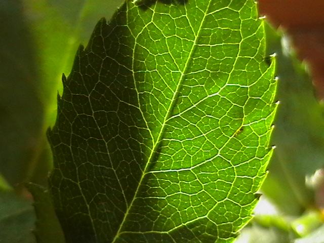 Вещества растительного происхождения, предупреждающие развитие рака